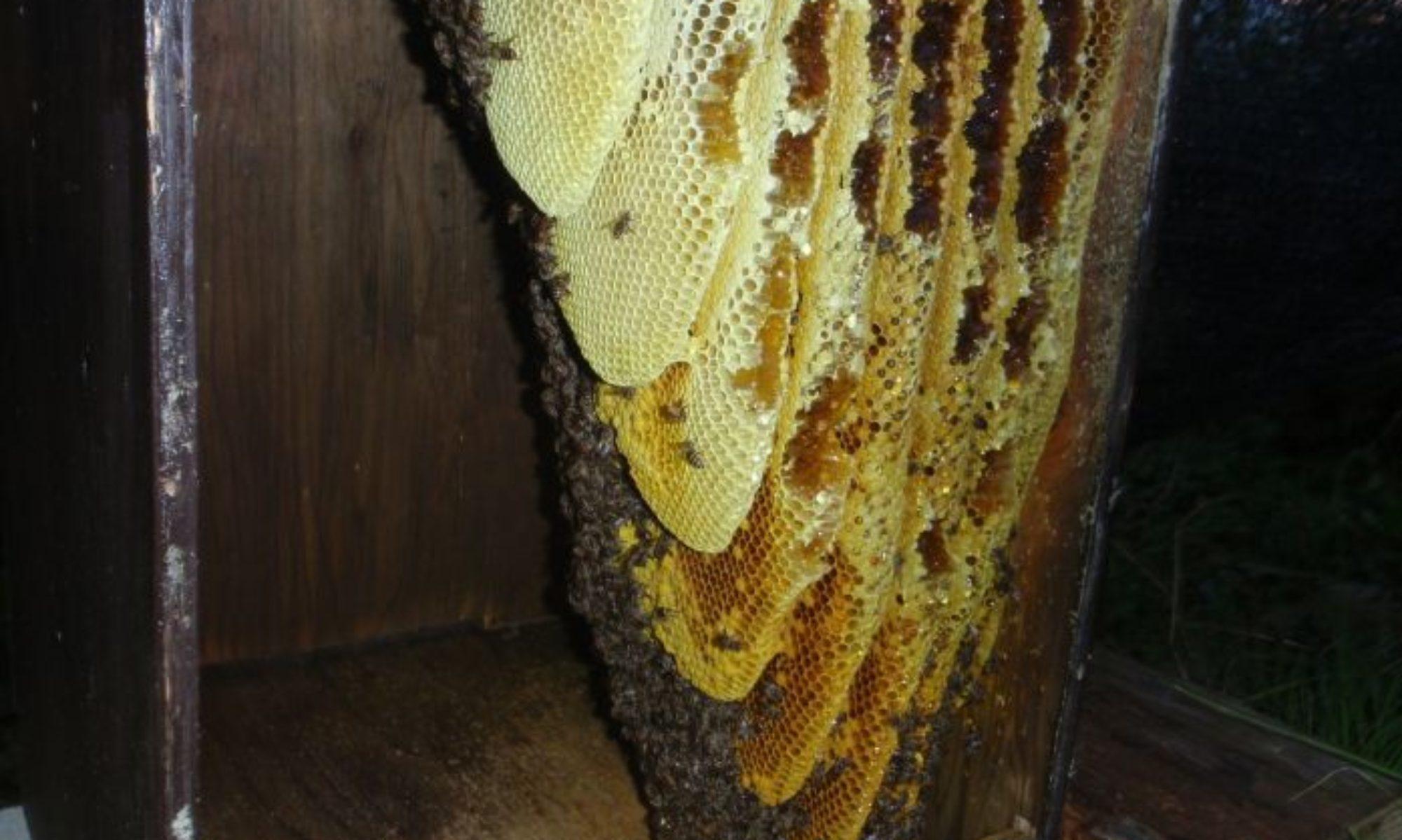 田舎暮らしと日本蜜蜂